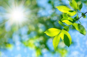 Pflanz mit Sonnenschein für Atemluft